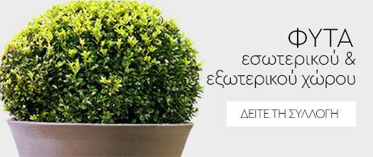 Ανθοπωλείο φυτά