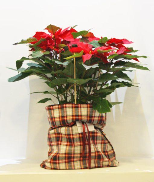 Χριστουγεννιάτικες συνθέσεις λουλουδιών-79